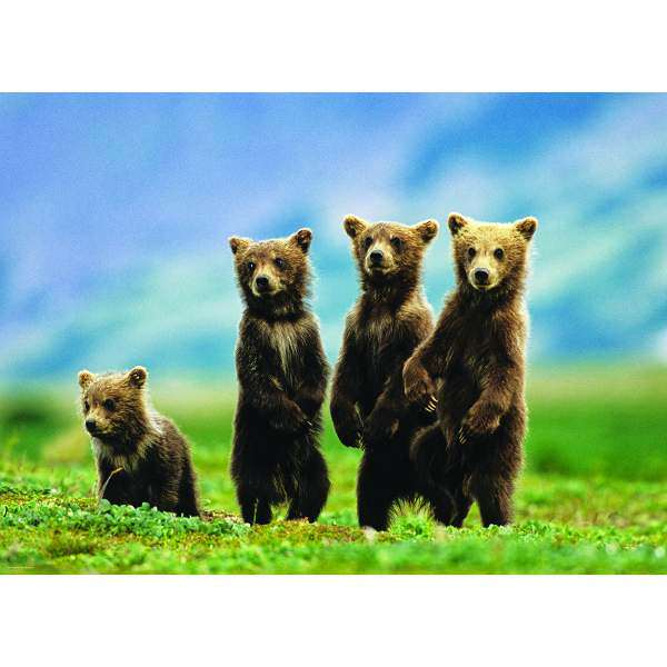 Bear Cubs Standing - 1000pc jigsaw puzzle