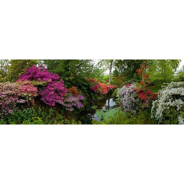 Bodnant Garden - 6000pc Panoramic jigsaw puzzle