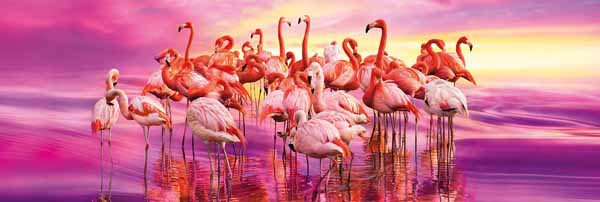 Flamingo Dance - 1000pc Panoramic jigsaw puzzle