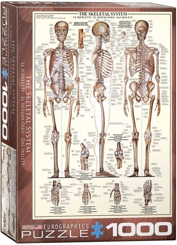 The Skeletal System - 1000pc jigsaw puzzle