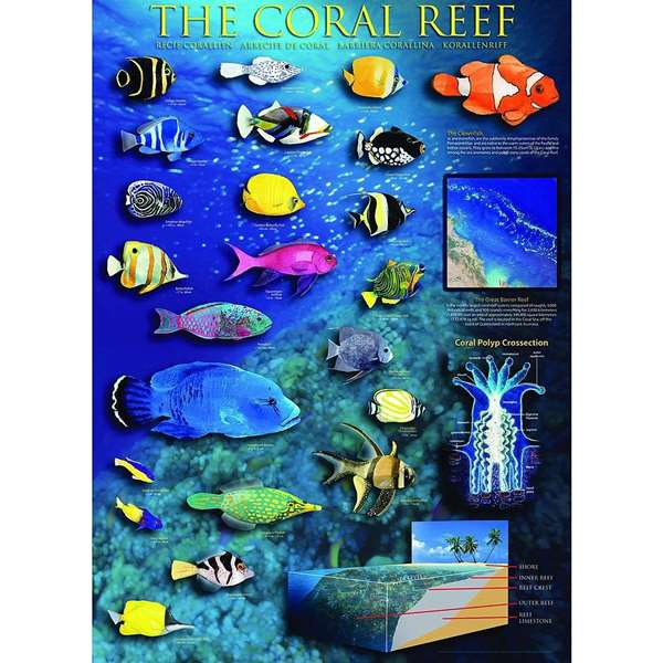 Coral Reef Jigsaw Puzzle From Jigsaw Puzzles Direct