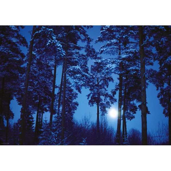 Full Moon - Magic Forest - 500pc jigsaw puzzle