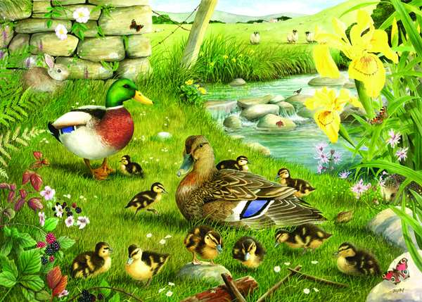 Ducks To Water - Extra Large jigsaw puzzle