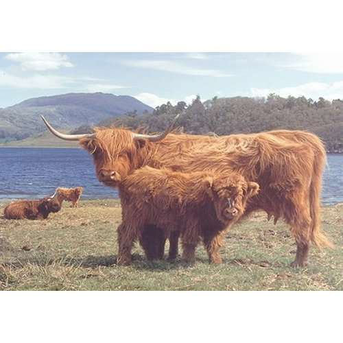 Highlanders Jigsaw Puzzle from Jigsaw Puzzles Direct ...