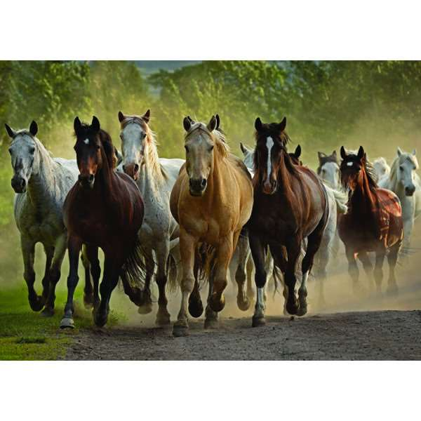 Group of Horses - 1000pc jigsaw puzzle