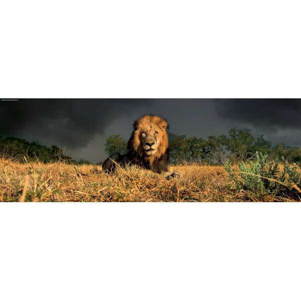 Lion - 1000pc Panoramic jigsaw puzzle