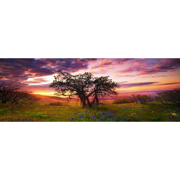 Oak Tree - 2000pc Panorama jigsaw puzzle