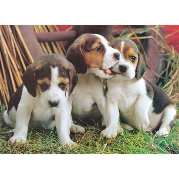 Puppies jigsaw puzzle