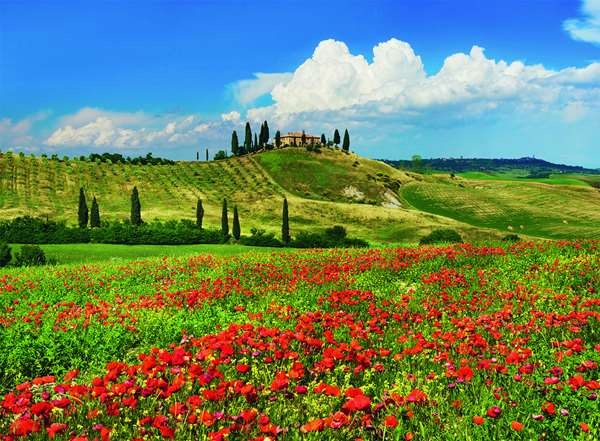 Summer In Tuscany - 500pc jigsaw puzzle