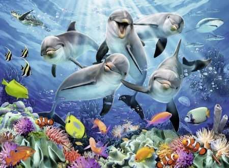 Dolphins - 500pc jigsaw puzzle
