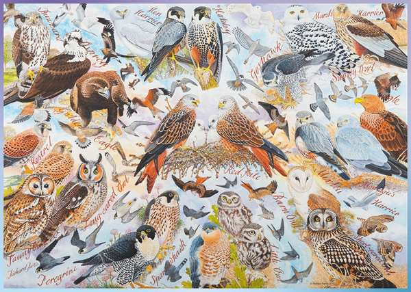 Avian World No 1 Birds Of Prey - 1000pc jigsaw puzzle