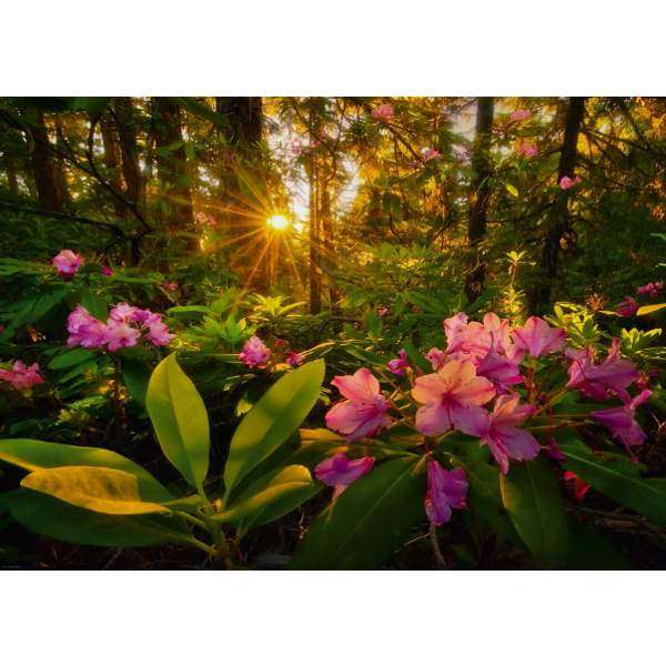 Rhododendron - 2000pc jigsaw puzzle