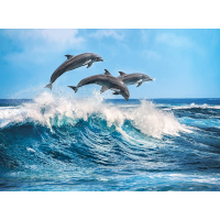 Diving Dolphins - 500pc