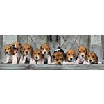 Beagles - Panoramic - 1000pc