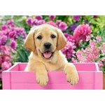 Labrador Puppy in a Pink Box - 500pc