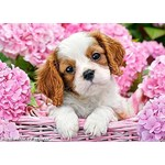 Puppy in Pink Flowers - 500pc