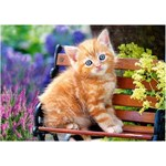 Ginger Kitten - 500pc