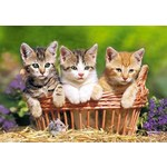 Three Lovely Kittens - 500pc