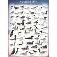 Coastal Birds of the North Atlantic