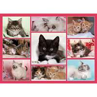 Cute Kittens - 1000pc