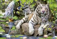 White Tigers of Bengal - 1000pc