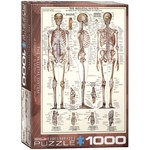 The Skeletal System - 1000pc
