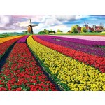 Tulip Fields - 1000pc