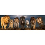 Big Cats - Panoramic - 1000pc