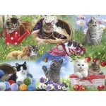 Cats - 12pc