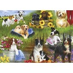Dogs - 12pc
