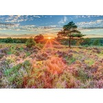 Heather at Sunset - 500pc