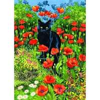 black cat poppy garden
