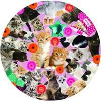 Kitty Madness Circular