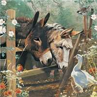 Donkeys Farm Friends - 1000pc