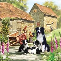 Border Collie Barn - 1000pc