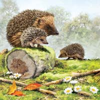 Hedgehog Family - 1000pc