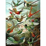 Humming Birds - 1000pc