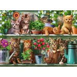 Cats on the Shelf - 500pc