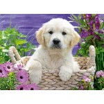 Sweet Golden Retriever - 500pc