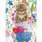 Teacup Kitten - 500pc